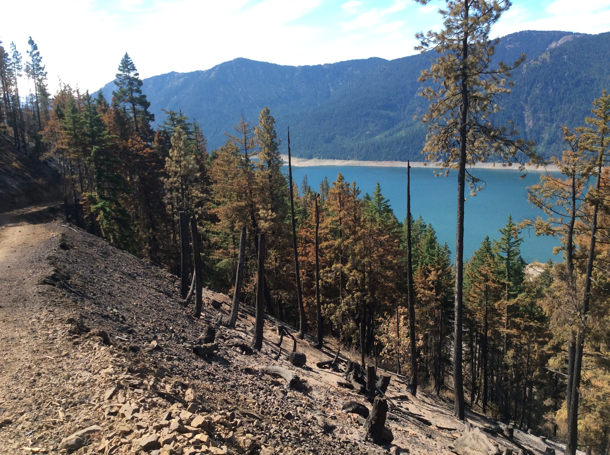 """This is the """"Morgan Unit,"""" which was thinned winter 2016-17, looking toward leave strip below the road. Moderate to high severity burn. Photo © Brian Mize/TNC"""