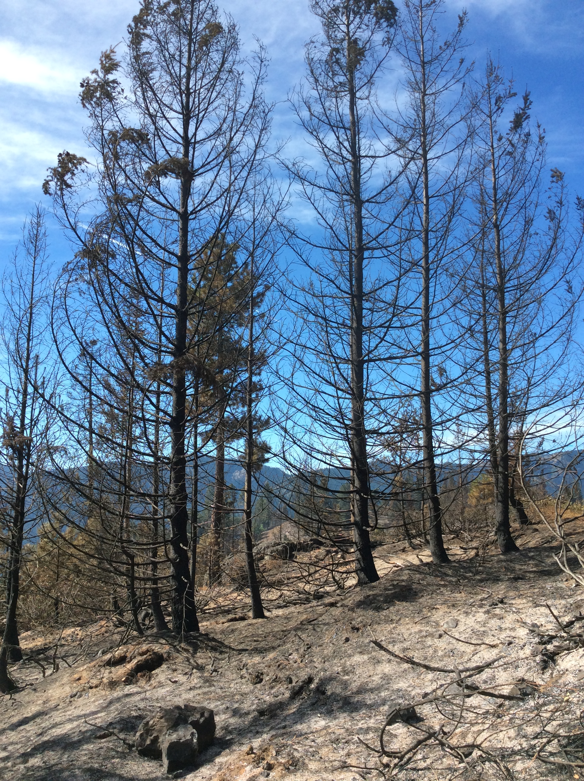This area of the Morgan Unit thinned summer 2016 experienced a high severity burn. Photo © Brian Mize/TNC