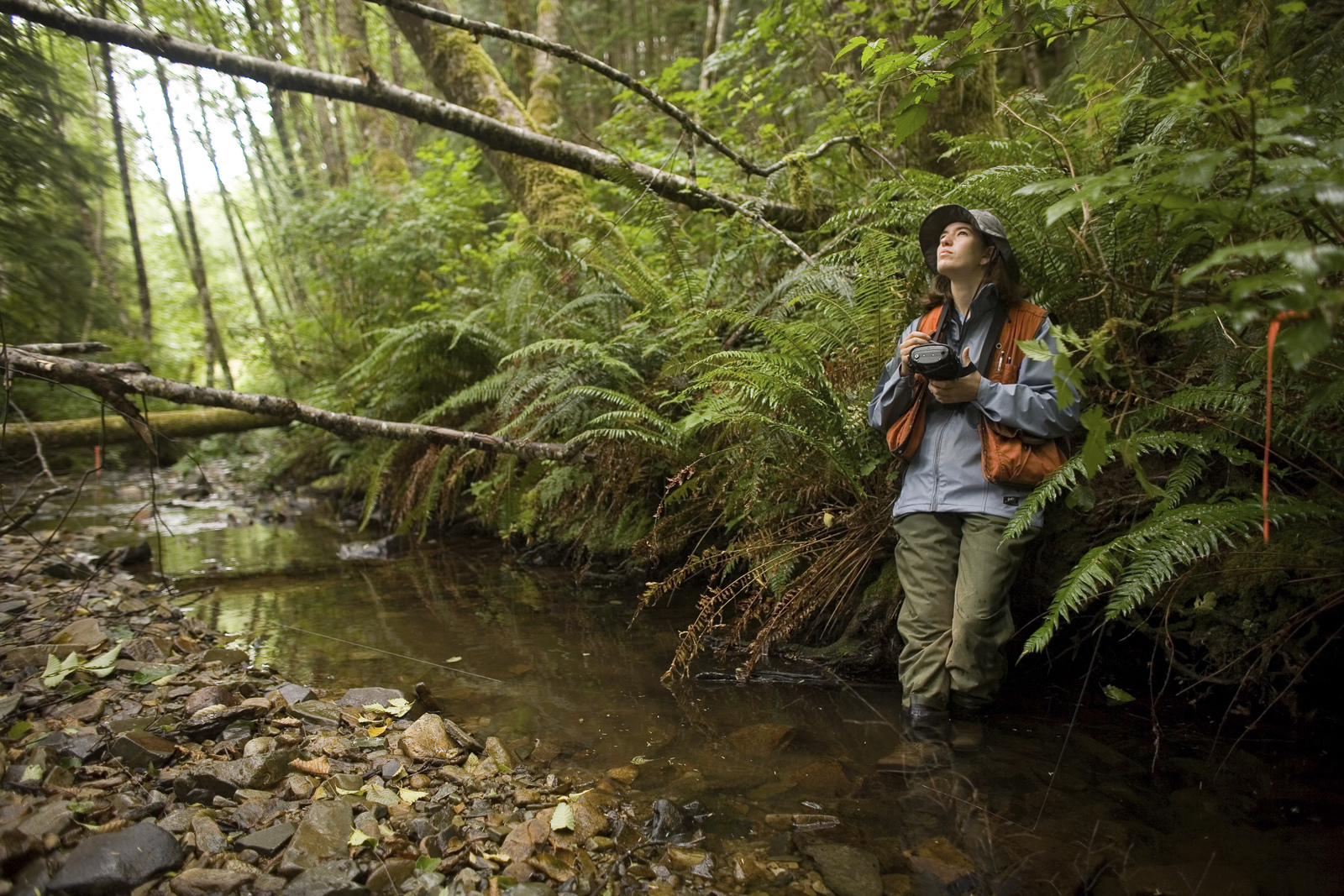 Liane Davis enters observations into an electronic data recorder while measuring the width and depth of a stream that feeds into Ellsworth Creek near Willapa Bay.Photo by Harley Soltes.