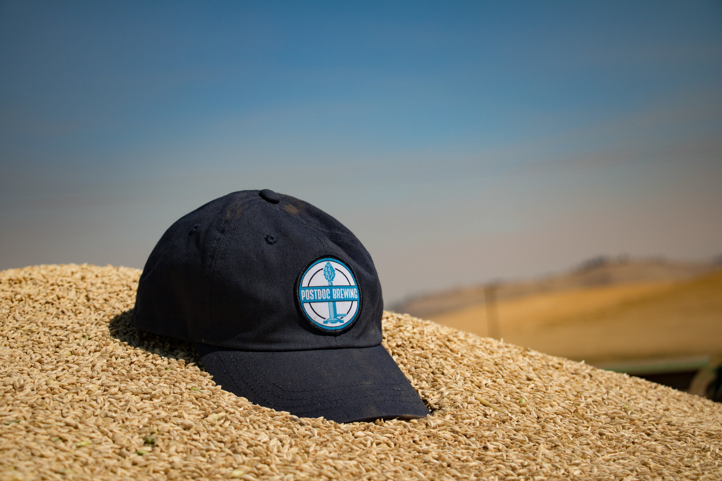 A Postdoc Brewing hat atop a pile of barley. Photo courtesy of Andrew Nelson.