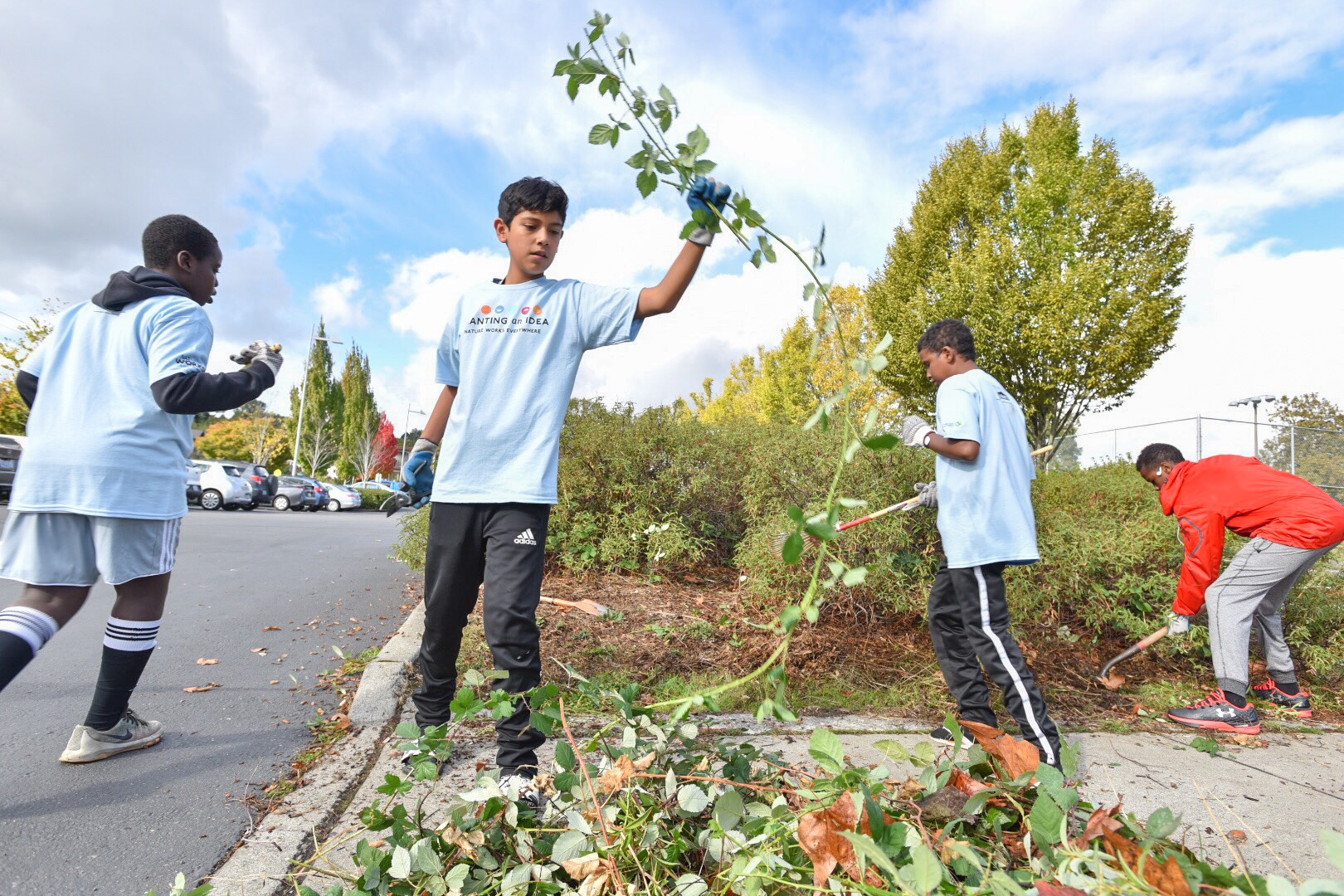 Student Soccer players help to remove blackberry bushes and other invasive plants from the South Shore School campus. Photo © Hannah Letinich