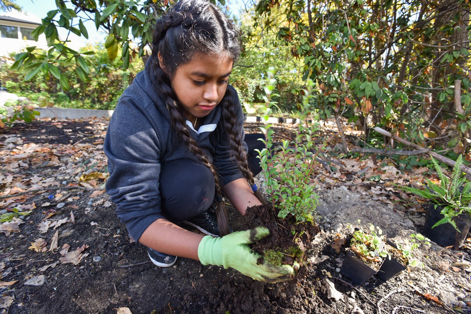 A student volunteer at Rainier Bean Urban Wetland Farm breaks up the soil around a native plant before she places it into the ground. Photo © Hannah Letinich