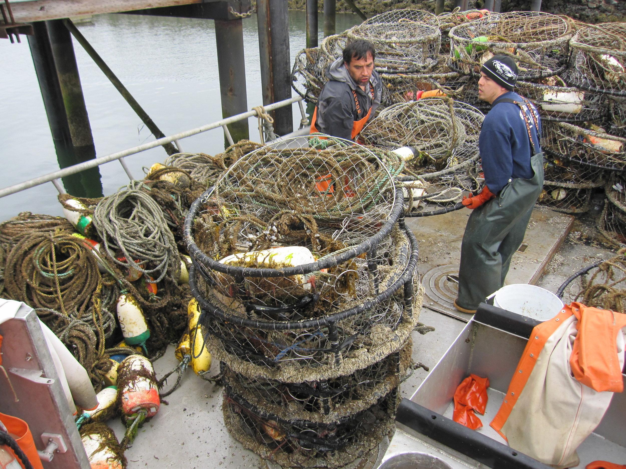 Crab pot retrieval in Grays Harbor County. Photo ©Kyle Antonelis/Natural Resources Consultants