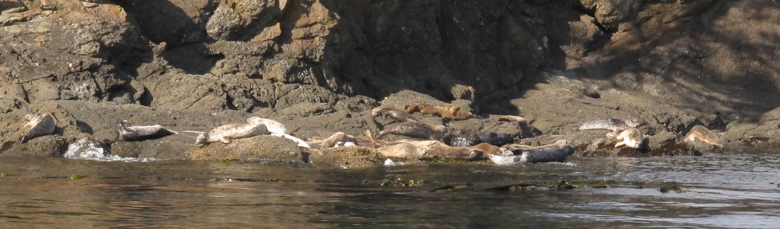 Harbor seals on the southeast corner of Sentinel Island.Photo © Phil Green / TNC