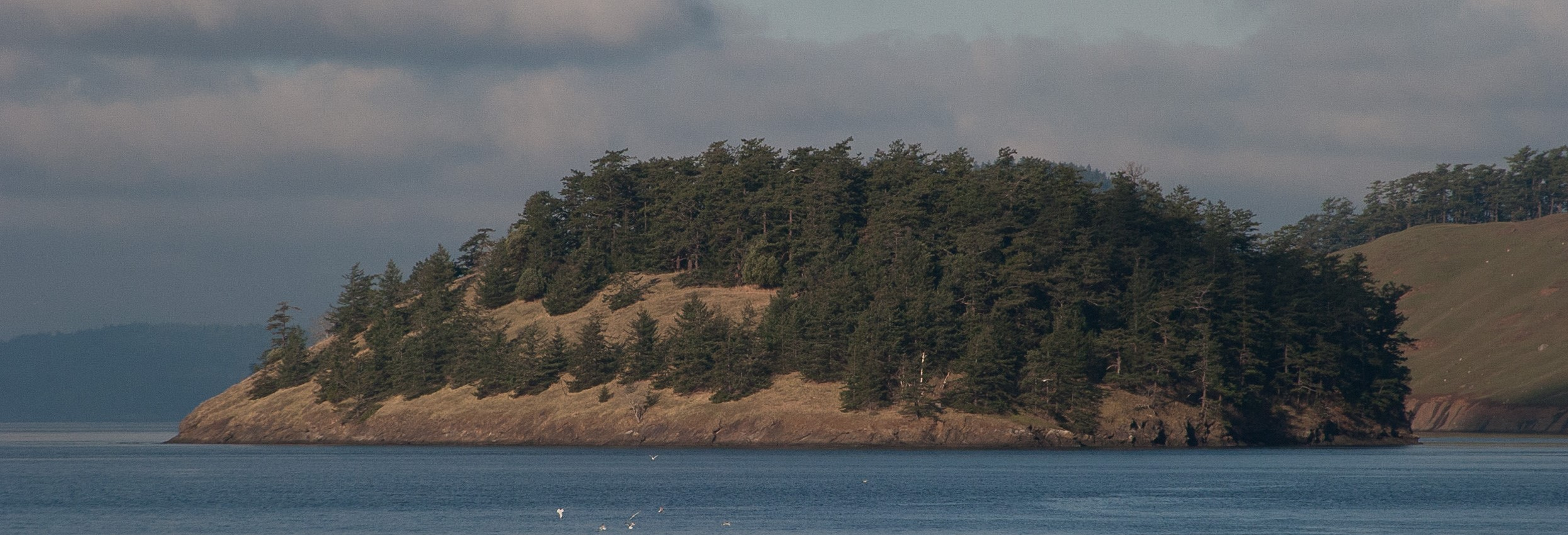 Sentinel Island 2007 with a line of young Douglas firs along the base of the meadow.Photo © Phil Green / TNC