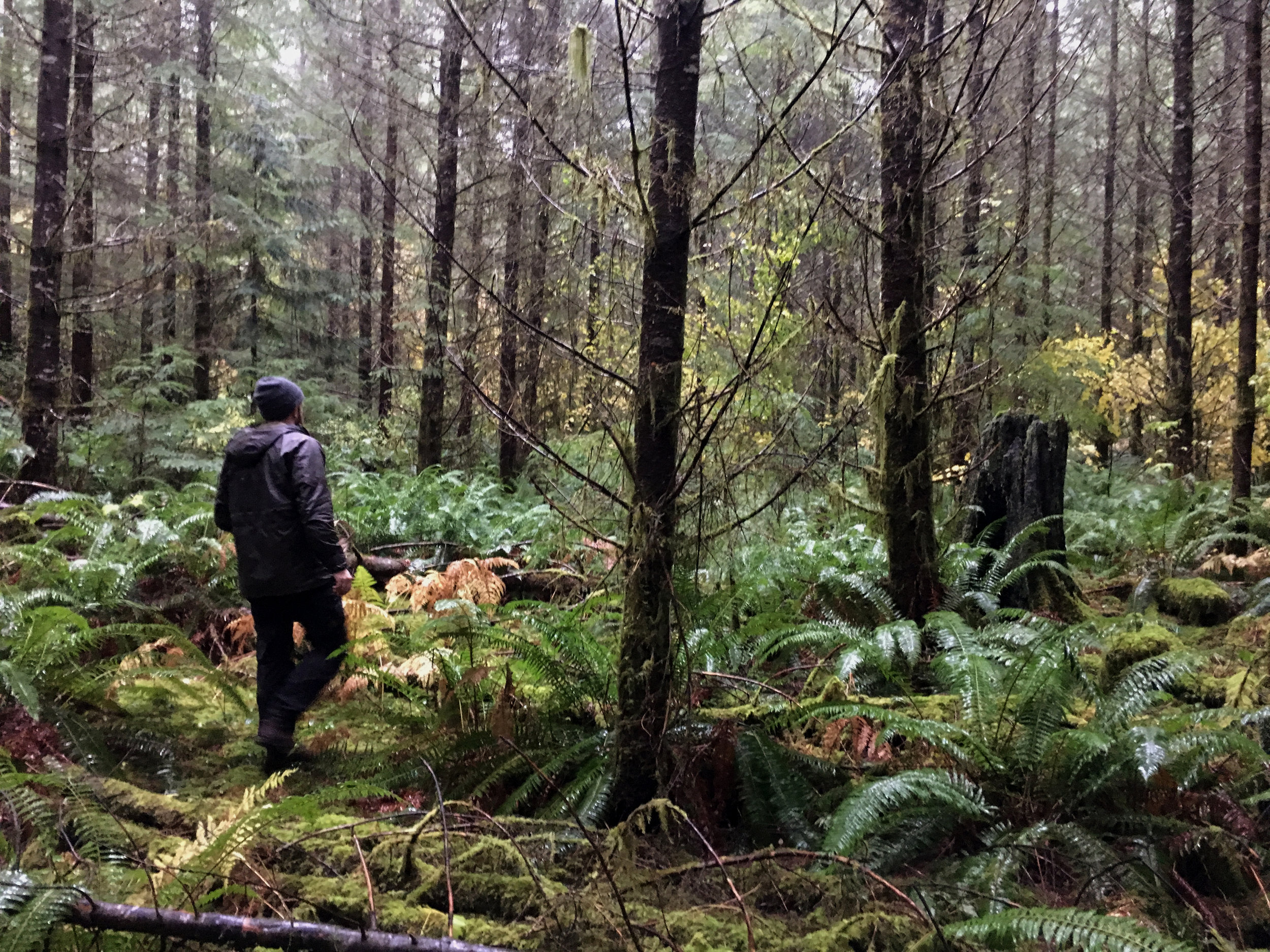 Wandering in the wet woods. Photo by Nikolaj Lasbo / TNC