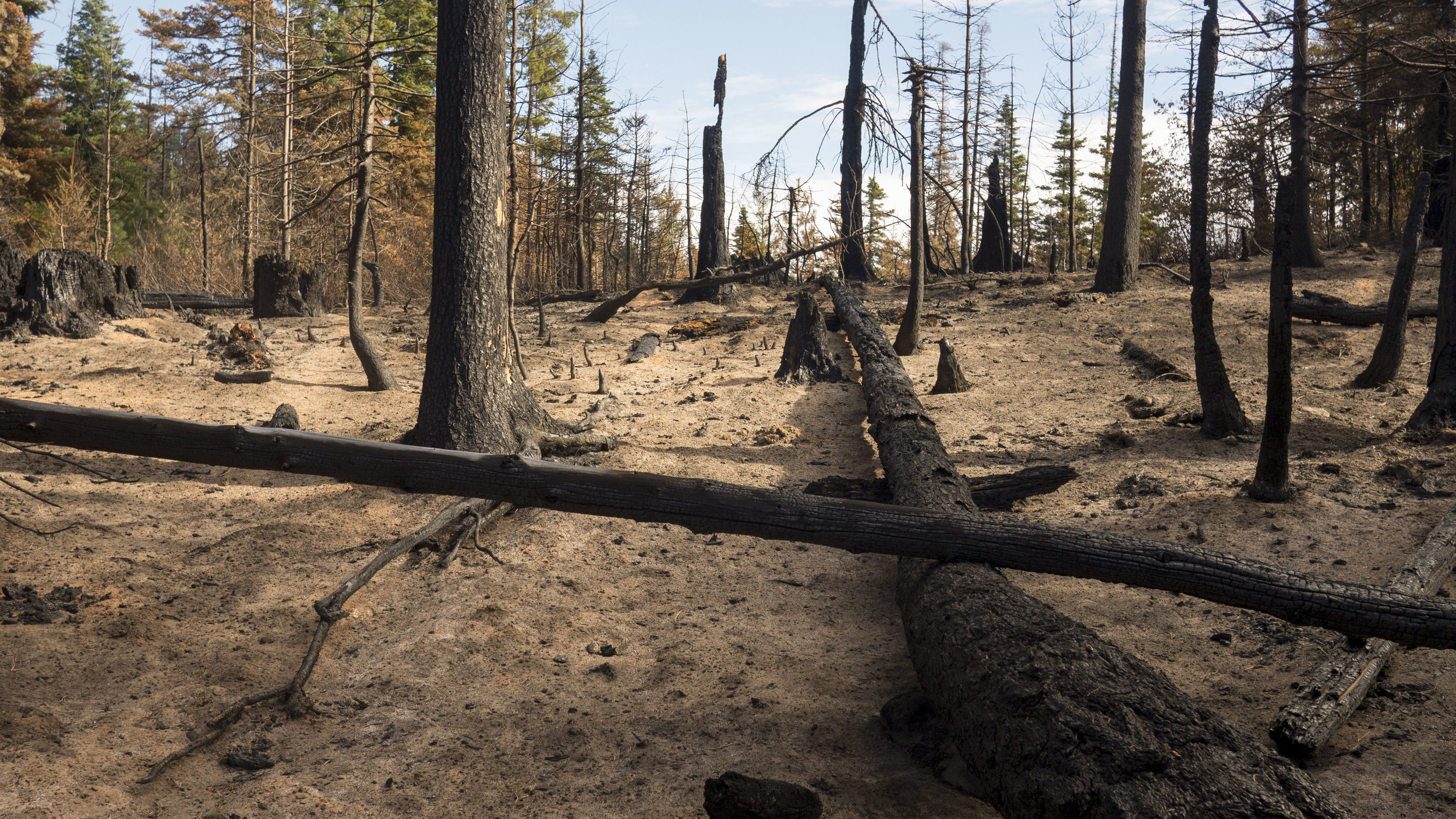 A burned area from the Jolly Mountain fire on Nature Conservancy-managed land. Photo © Will Chen / TNC