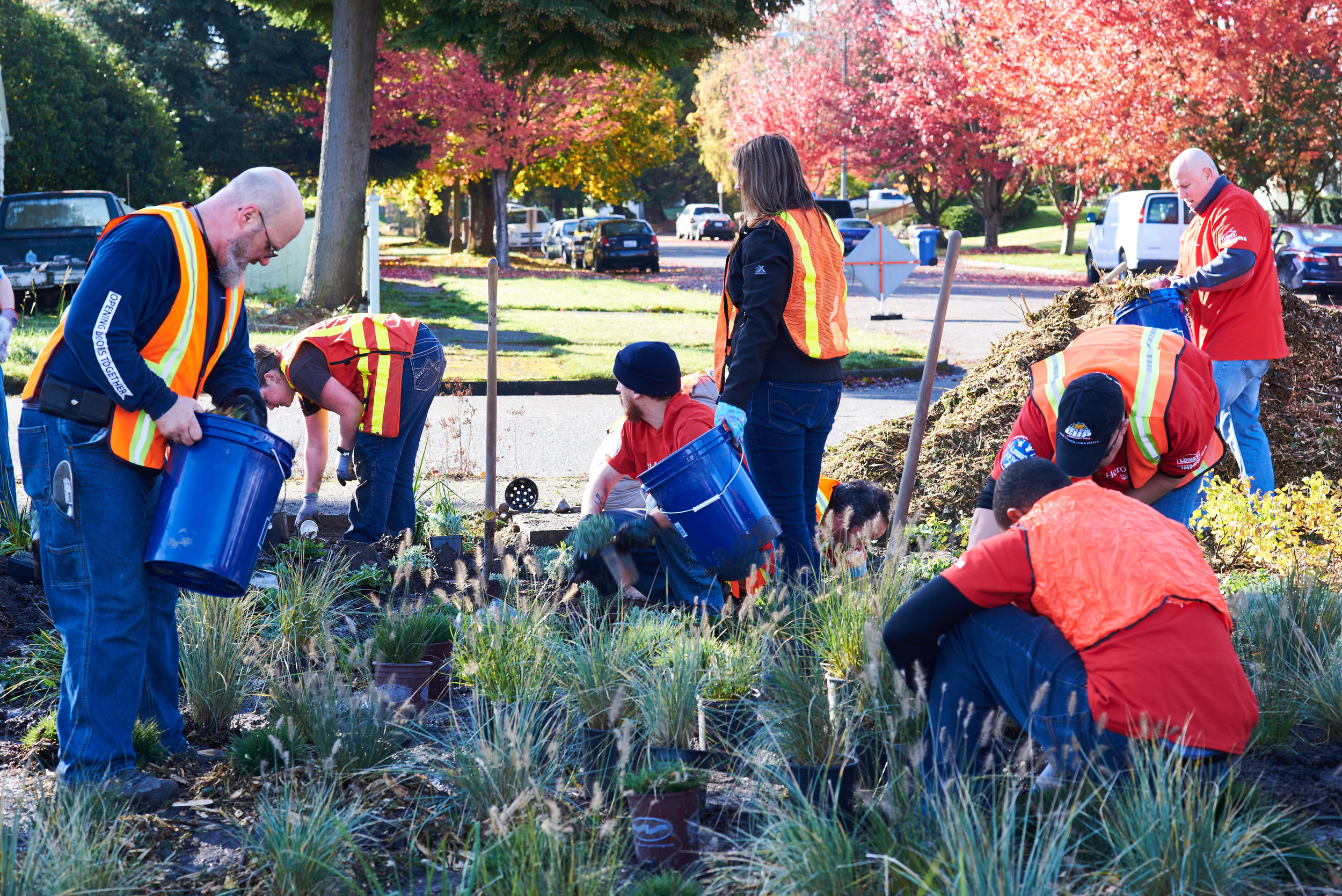 Make a Difference Day, October 2016. Depave and plant project in Tacoma--this was Planting day. Photo © Michael B Maine.