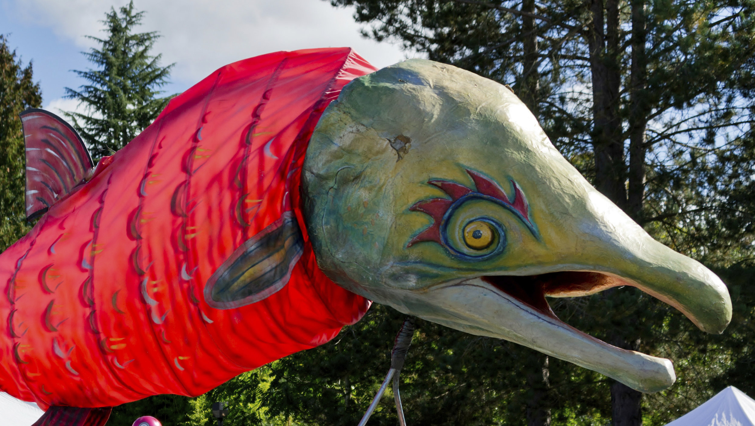 A salmon sculpture at Issaquah Salmon Days. Photo by Milo Zorzino.  Volunteer.