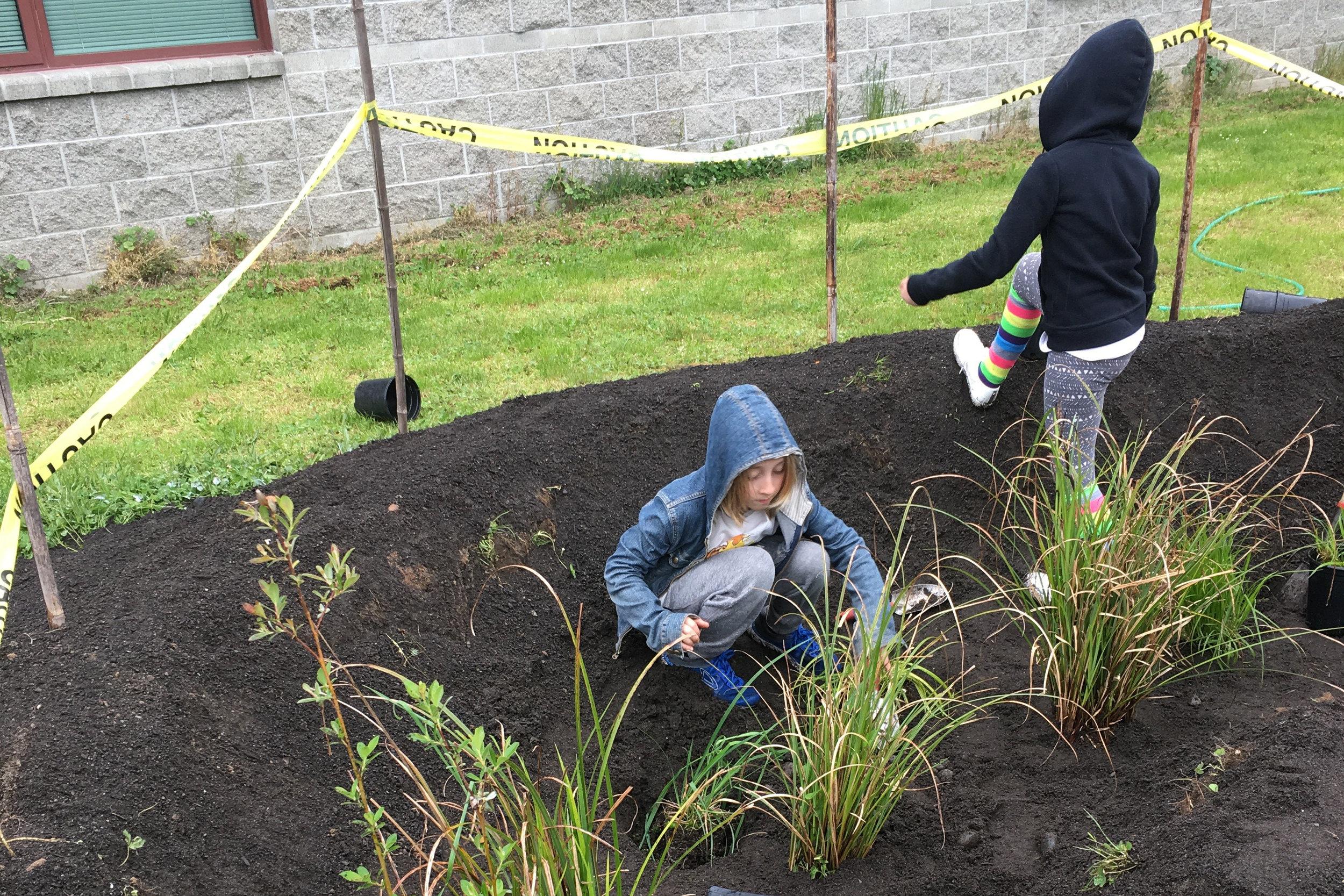 Pathfinder Elementary schoolchildren plant elements of the rain garden. Photo courtesy of Tasha Mosher.