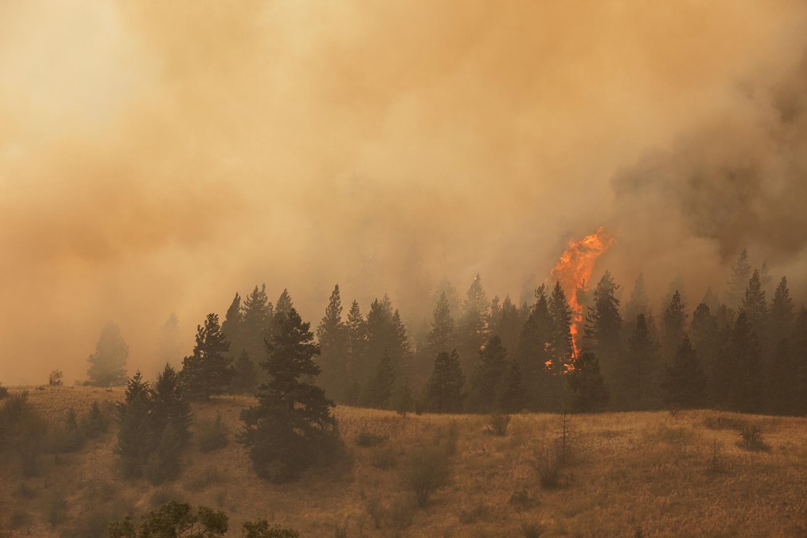 Sinlahekin Wildlife Area near Blue Lake during 2015 Okanogan Complex Fire. Photo © John Marshall.