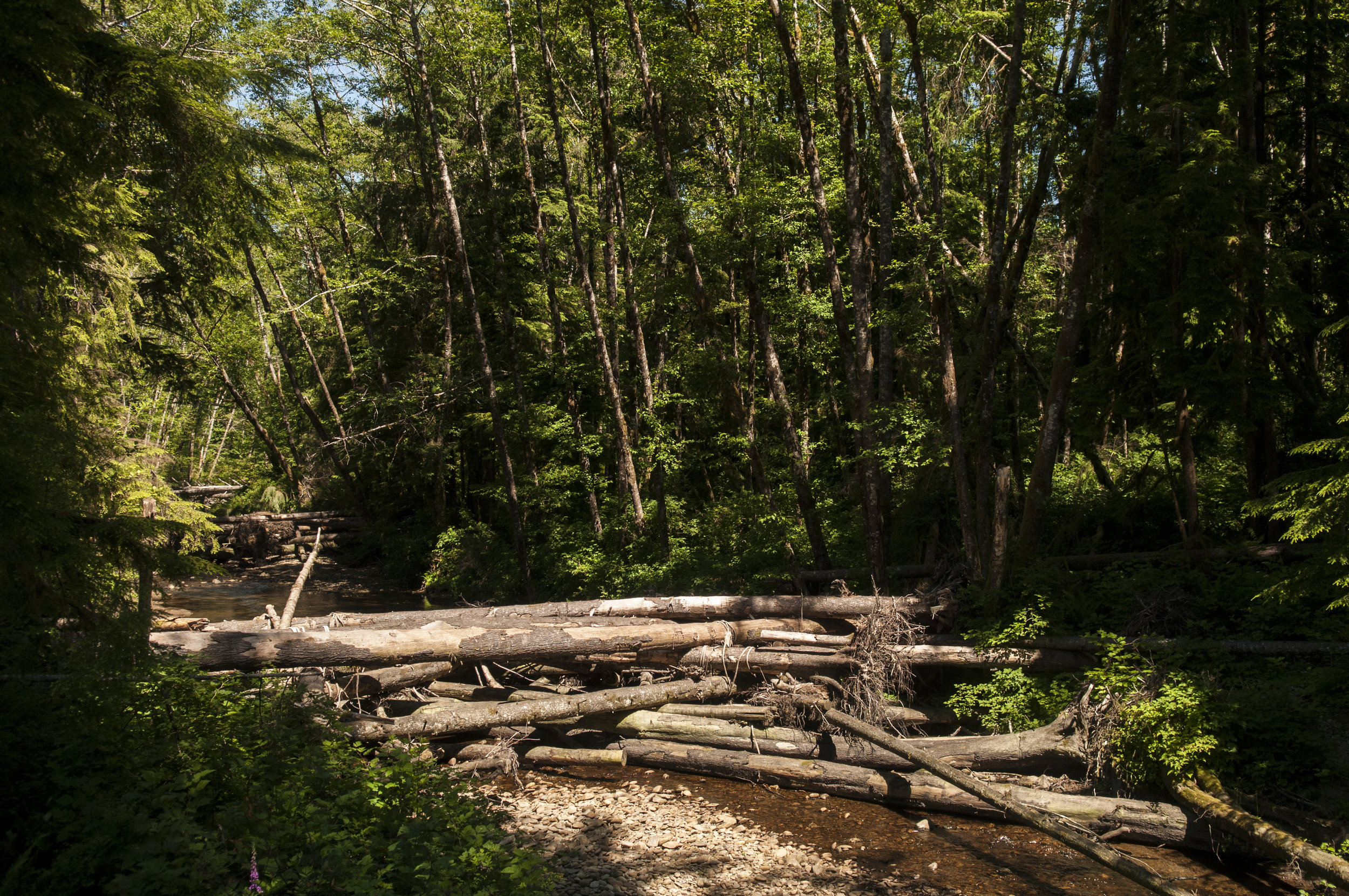 A Hurst Creek log jam in summer 2017. Photo © Nikolaj Lasbo / TNC