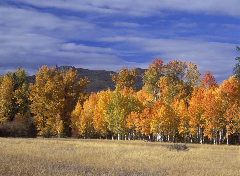 Methow Wildlife Area along the Chewuch River.Photo by John Marshall.