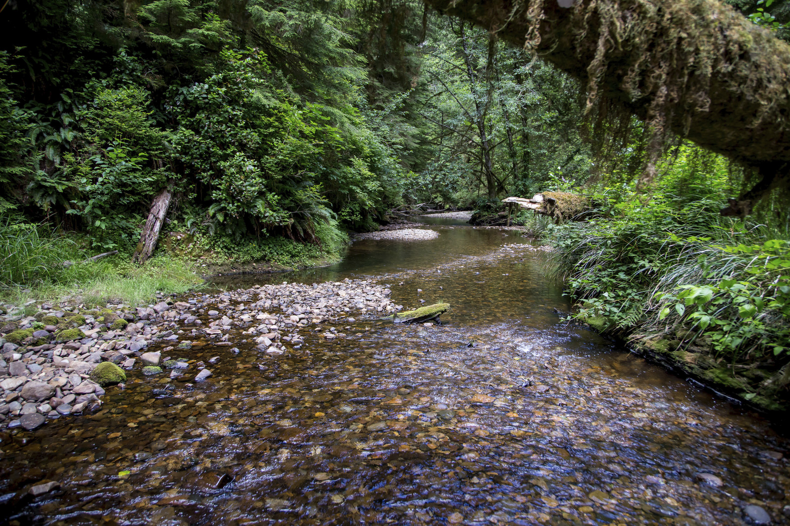 Our Ellsworth Preserve in Southwest Washington protects old-growth forest and provides critical habitat for salmon, amphibians, birds and other species. Photo by G. Thomas Corsini.
