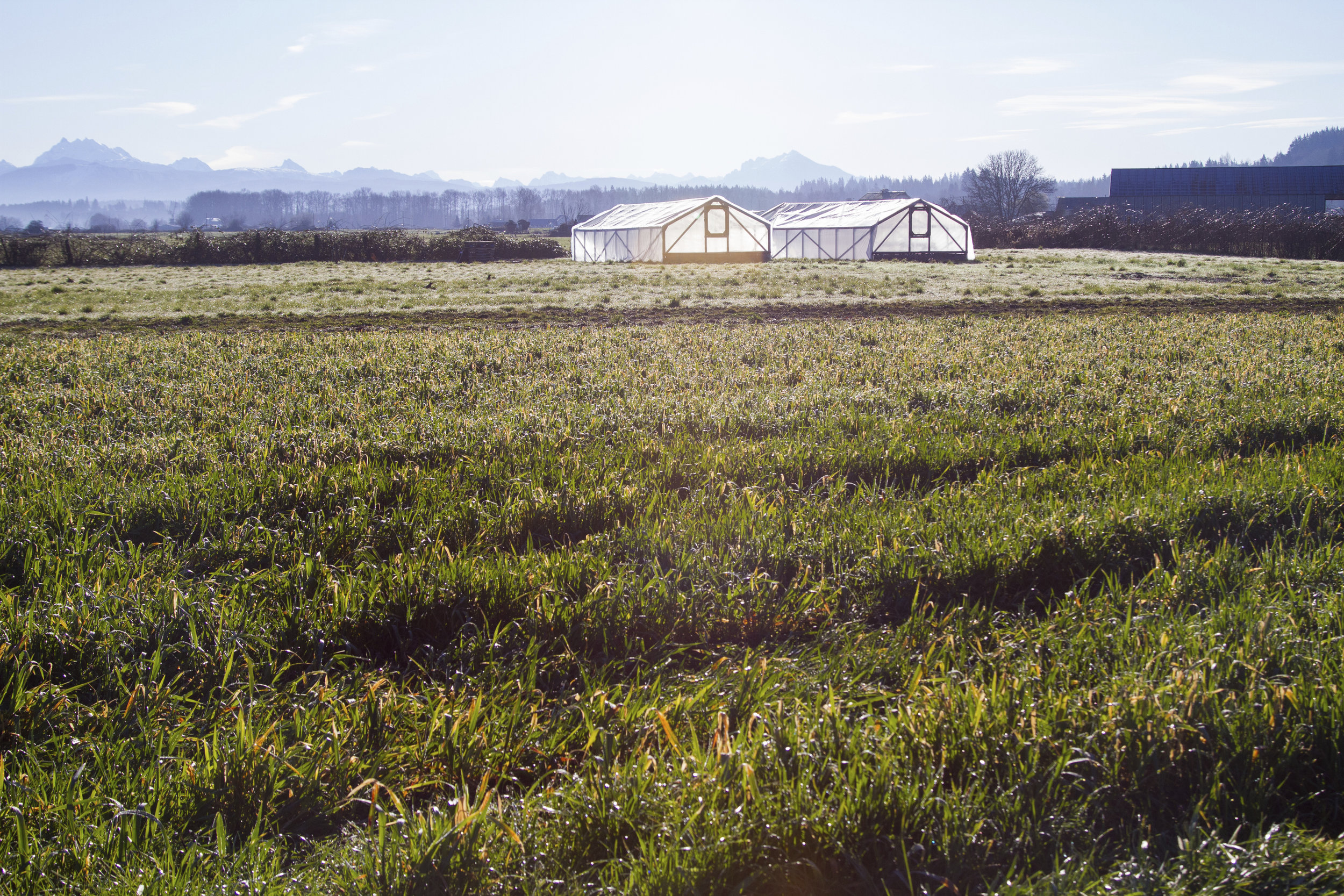 Courtney Baxter interviewed Tristan Klesick about his experience on Klesick Farm and his passion for community-based conservation. These are Tristan's greenhouses. Photo by Kelly Compton.