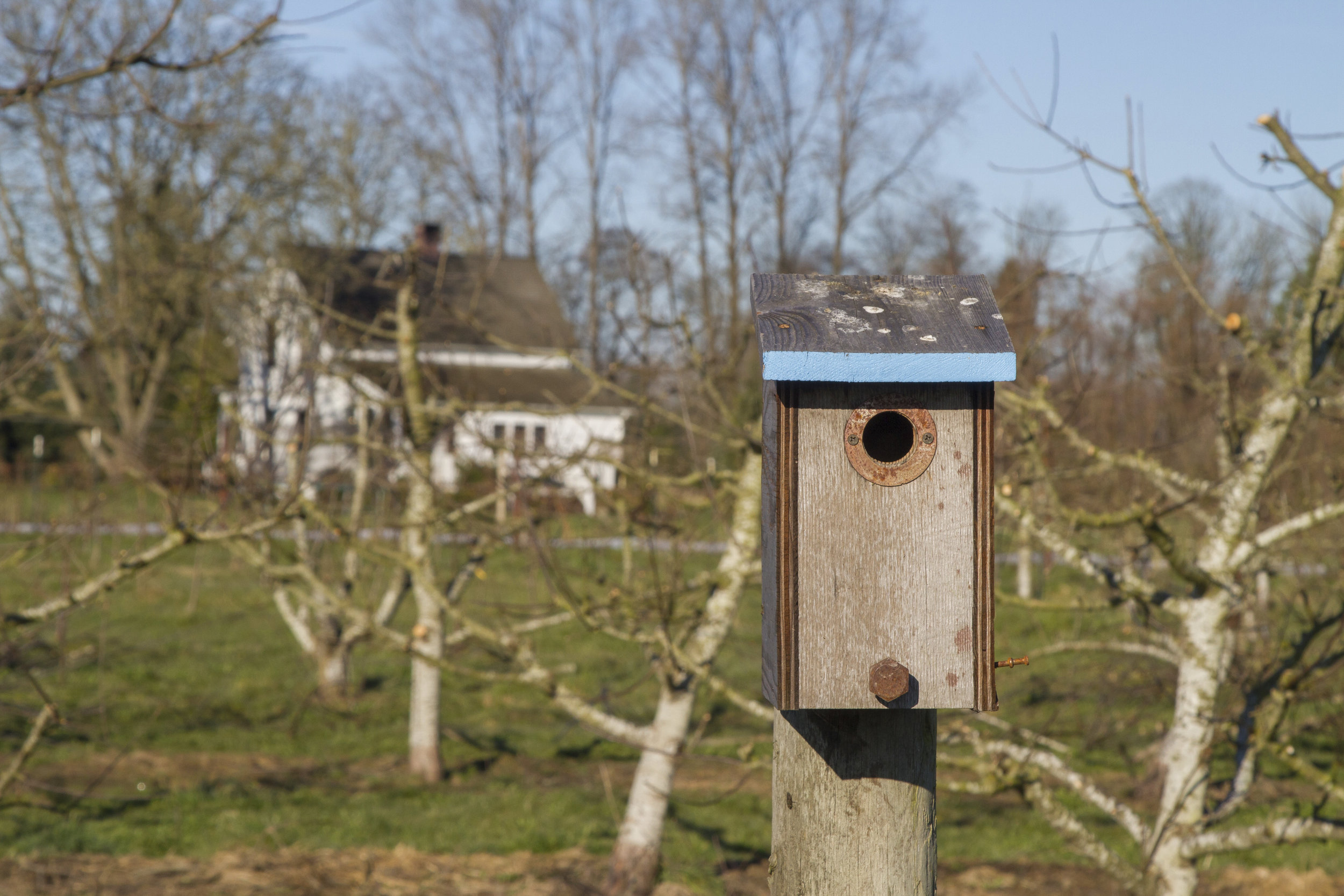 A bird house for swallows.  Photo by Kelly Compton
