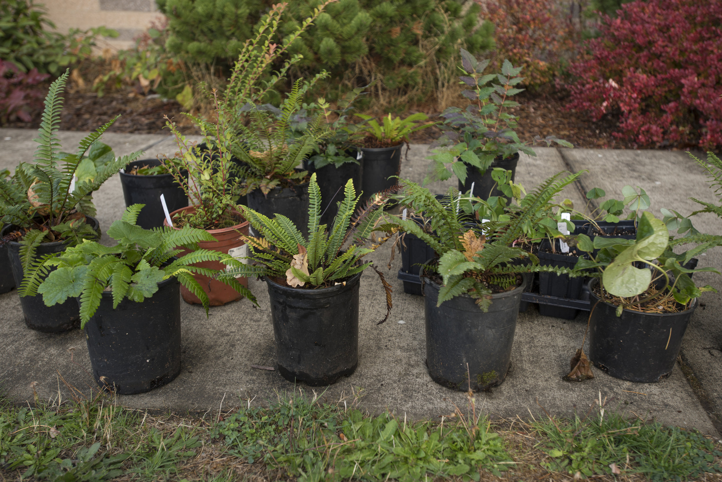 Plants waiting to be planted in a rain garden. Photo © Hannah Letinich