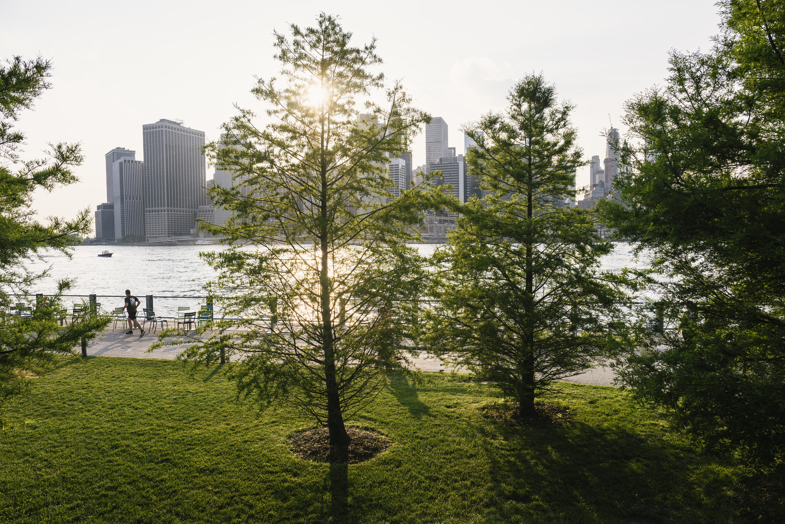 Trees in Brooklyn Bridge Park. Photo © Kevin Arnold