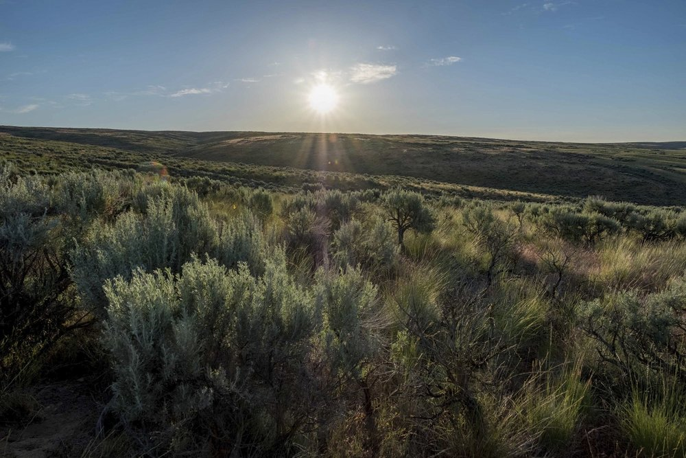 Moses Coulee, on the spectacular Columbia Plateau in Douglas County, is protected by LWCF's federal grant program – and it's one of The Nature Conservancy's largest preserves in Washington. Photo by Kit Swartz