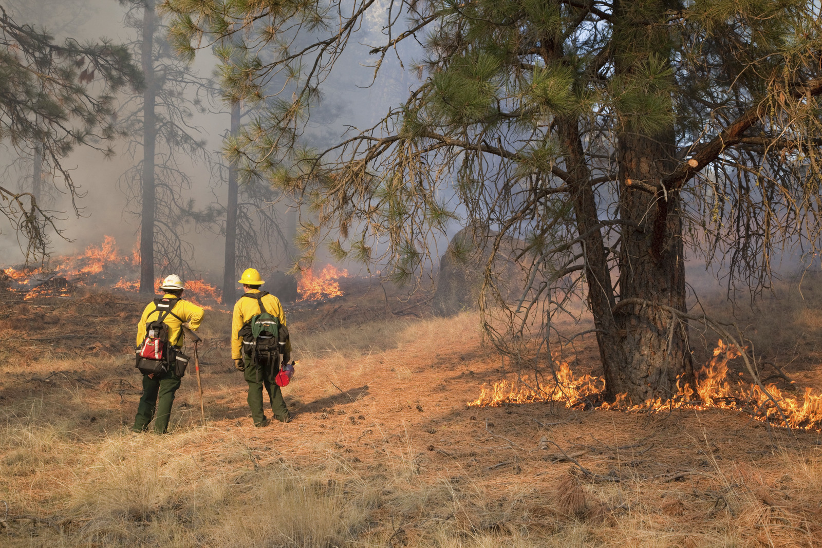 A prescribed fire in a ponderosa pine forest in the Sinlahekin Wildlife Area in Okanogan County. Prescribed burns are one way to create resilience in our landscapes. Photo © John Marshall.