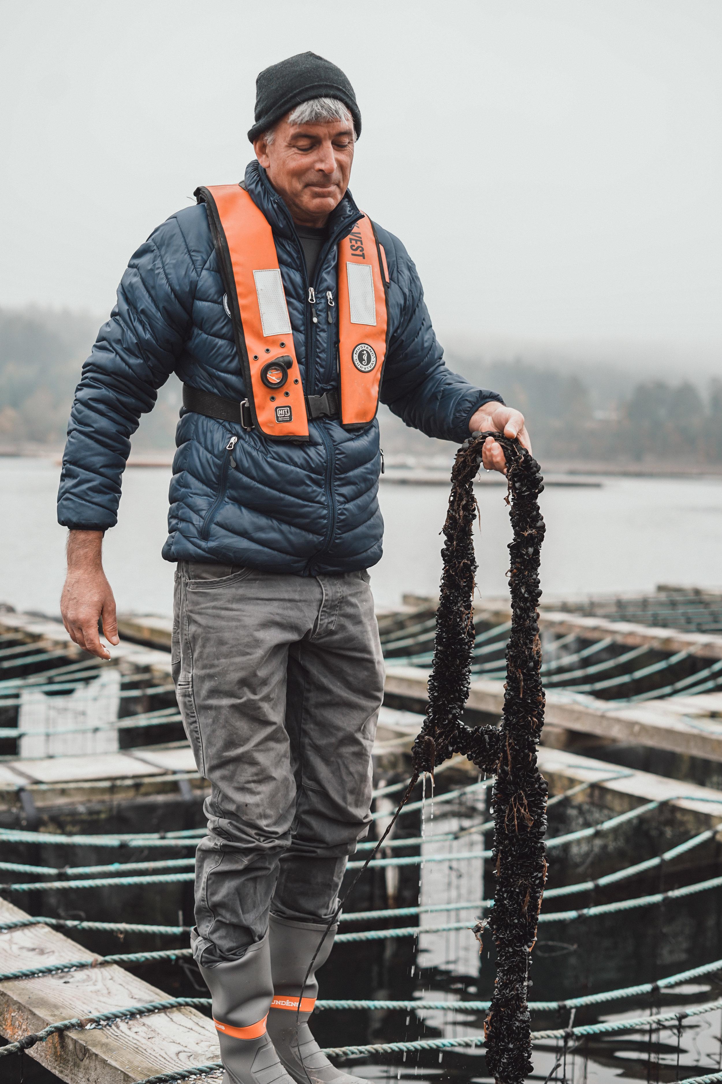 Tim Jones pulls up a string of mussels at Penn Cove Shellfish Farm.