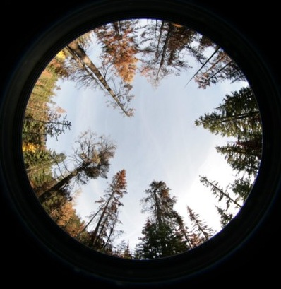 Hemispherical camera shots will help us compare tree canopy conditions to snowpack retention at a range of monitoring sites in the Eastern Cascades.