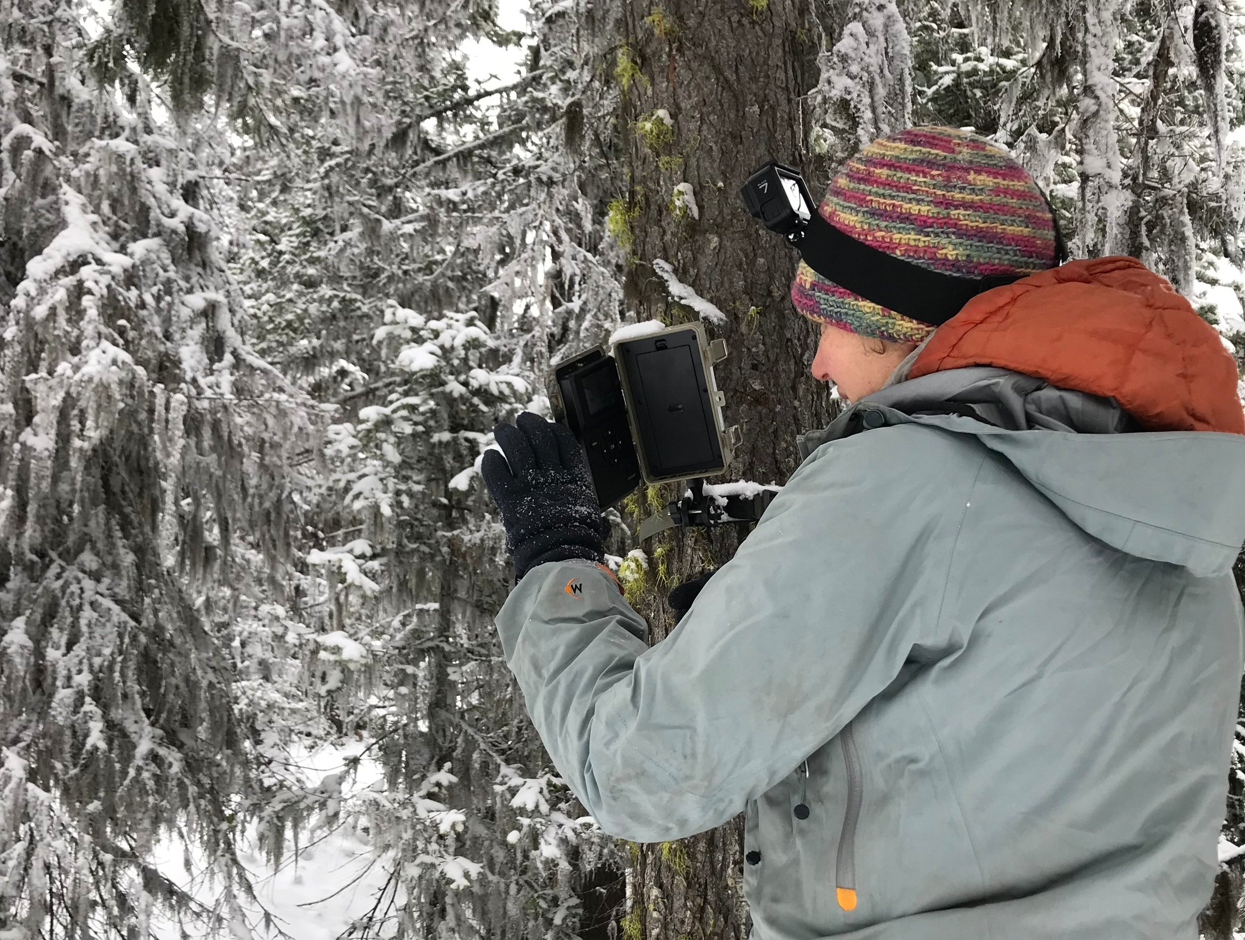 We want to know: Do our forest thinning strategies align with snowpack retention to secure water in a warming climate? At a research site in Blewitt Pass, scientist Emily Howe checks the status of gear to track snow accumulation and melt-out through the winter season. Photo by Jamie Robertson.