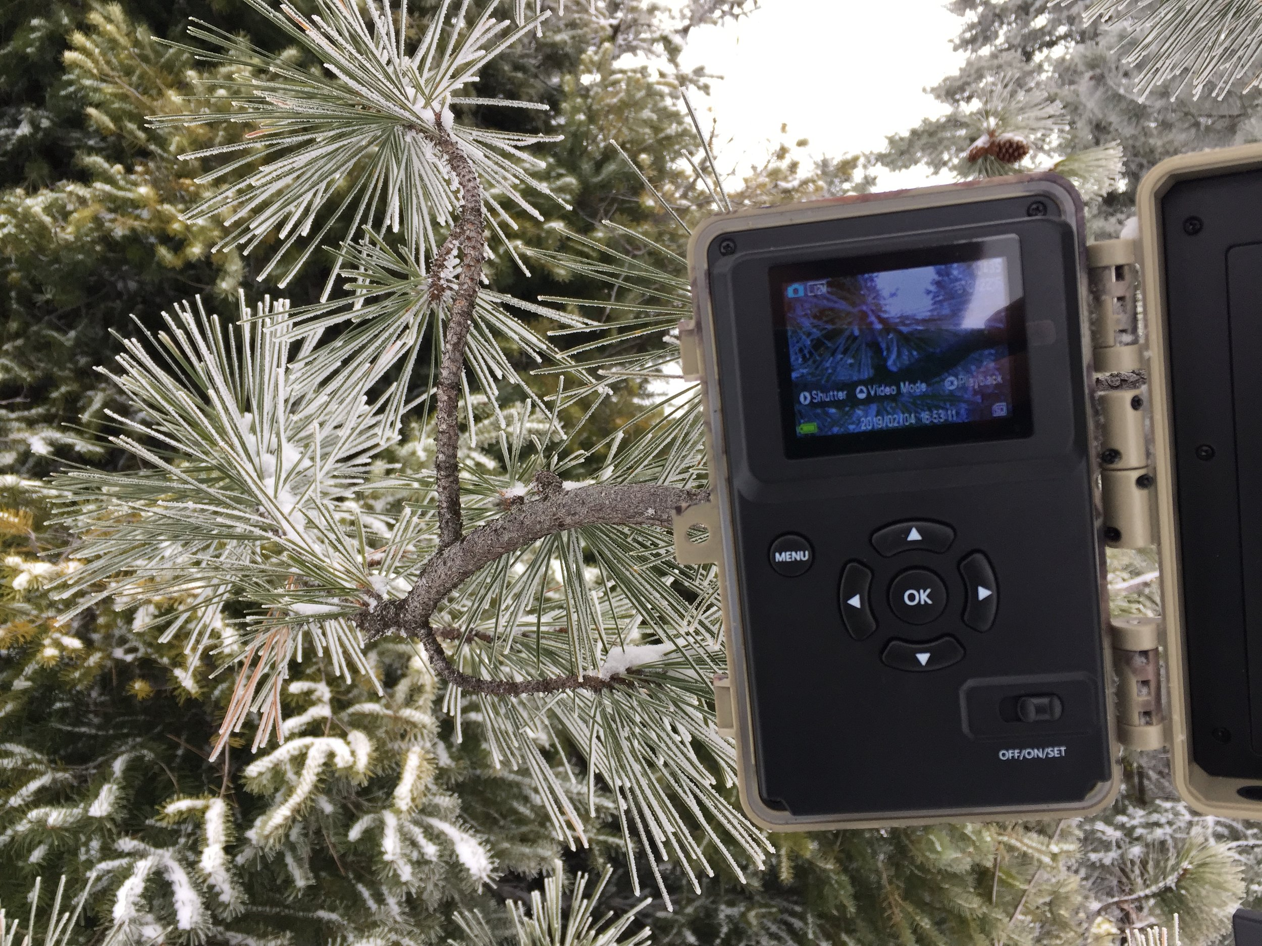Time-lapse cameras at our research sites are mounted high in surrounding trees, programmed to snap images daily at consistent times of morning, afternoon and night. Photo by Emily Howe.