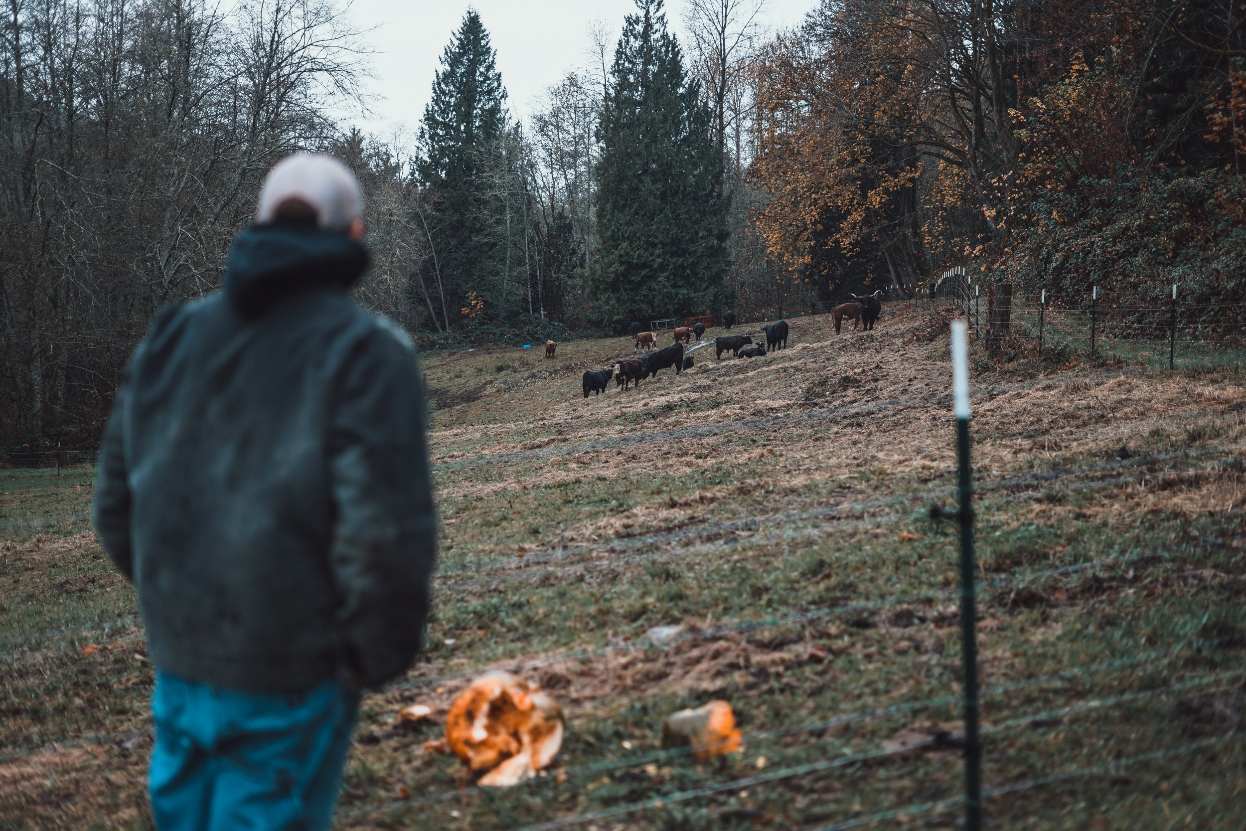 Tory looking out at his Angus cattle. Photo by Courtney Baxter / TNC