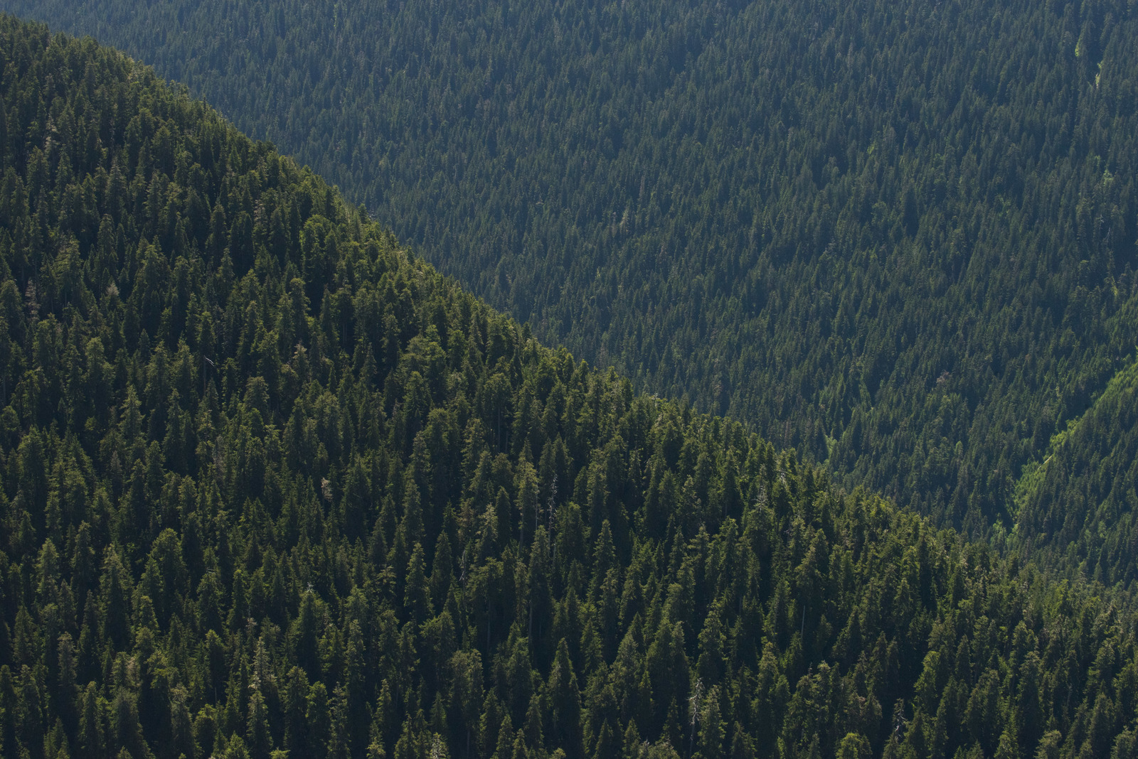 Our forests are part of who we are as Washingtonians. Olympic National Forest by Hannah Letinich / LightHawk.