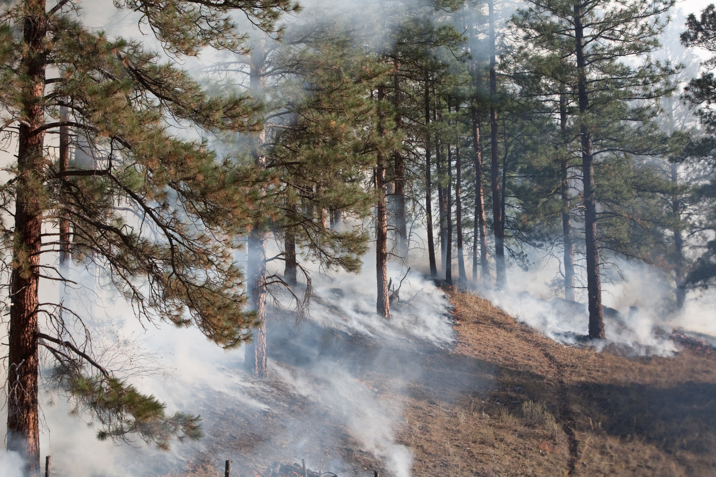 Prescribed fire in Sinlahekin Wildlife Area © John Marshall