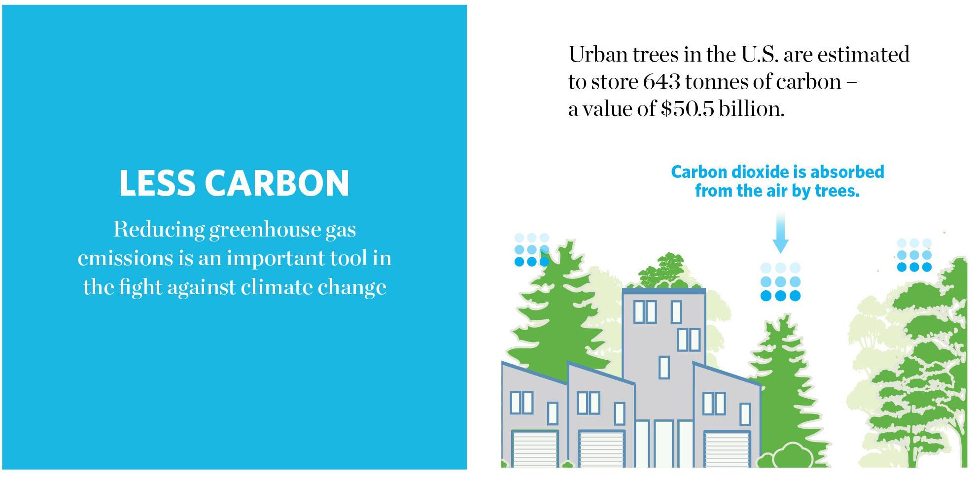 Urban trees 1.jpg