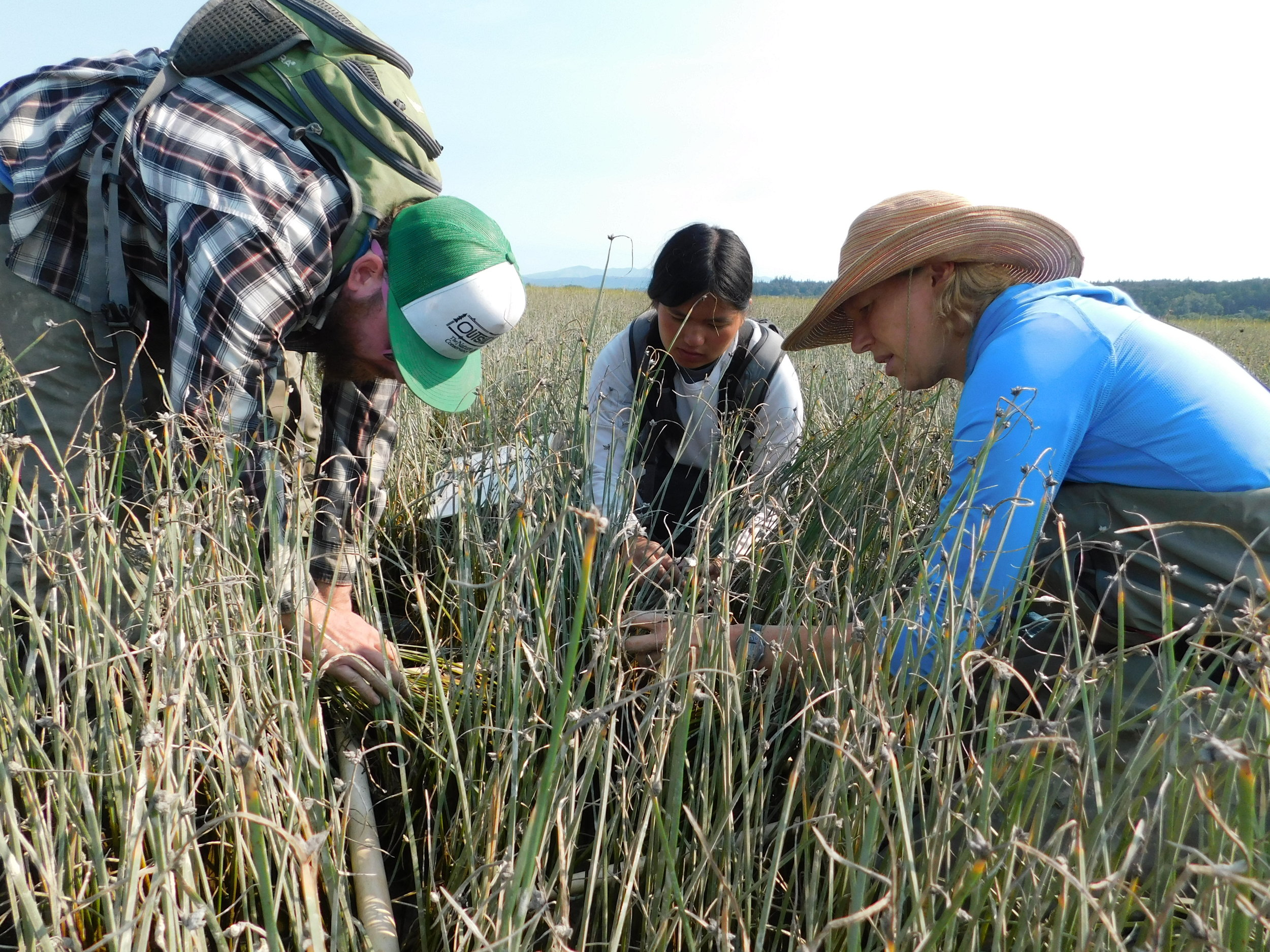 Our research team evaluates restoration progress at Port Susan Bay near Stanwood, WA. Photo by Molly Bogeberg.