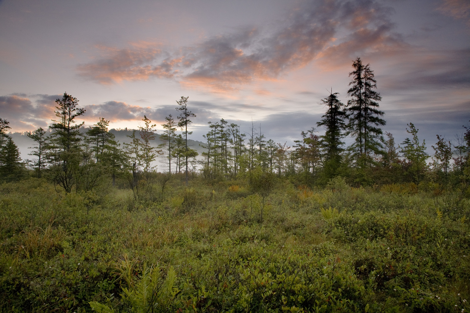 Sunrise over spruces at The Nature Conservancy's Cranesville Swamp Preserve in northern West Virginia. Photo by Kent Mason.