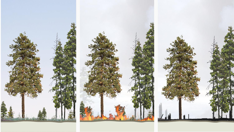 Tree_Story_Social_v2-03.jpg
