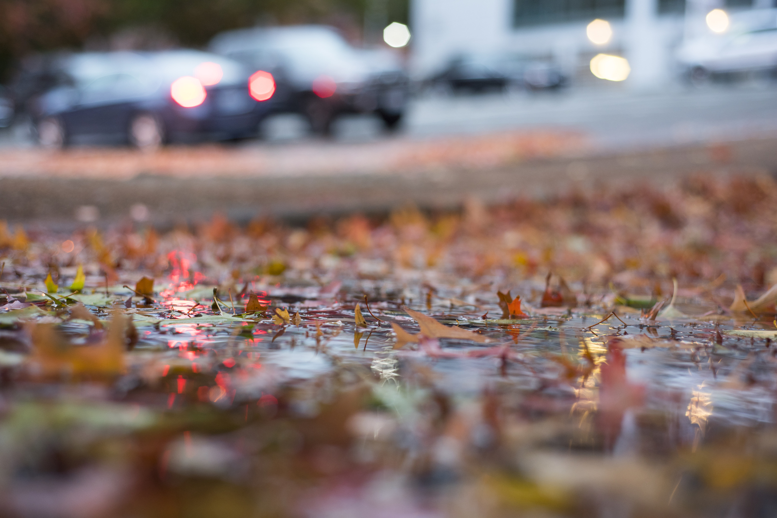 Autumn in rainy Seattle. Photo by Hannah Letinich.