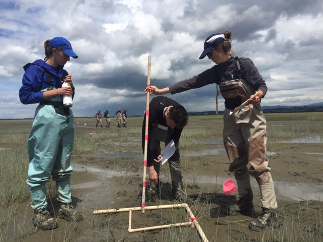 Monitoring crew takes samples at Port Susan Bay, to prepare for a new phase of restoration. © Emily Howe/TNC