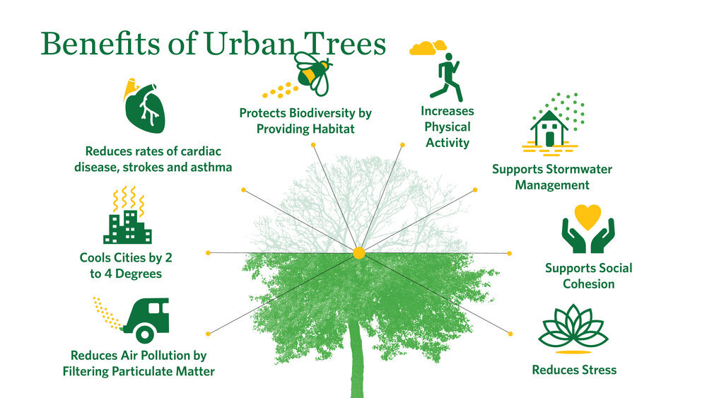 Even in urban spaces, nature and trees provide myriad benefits for community and mental health.