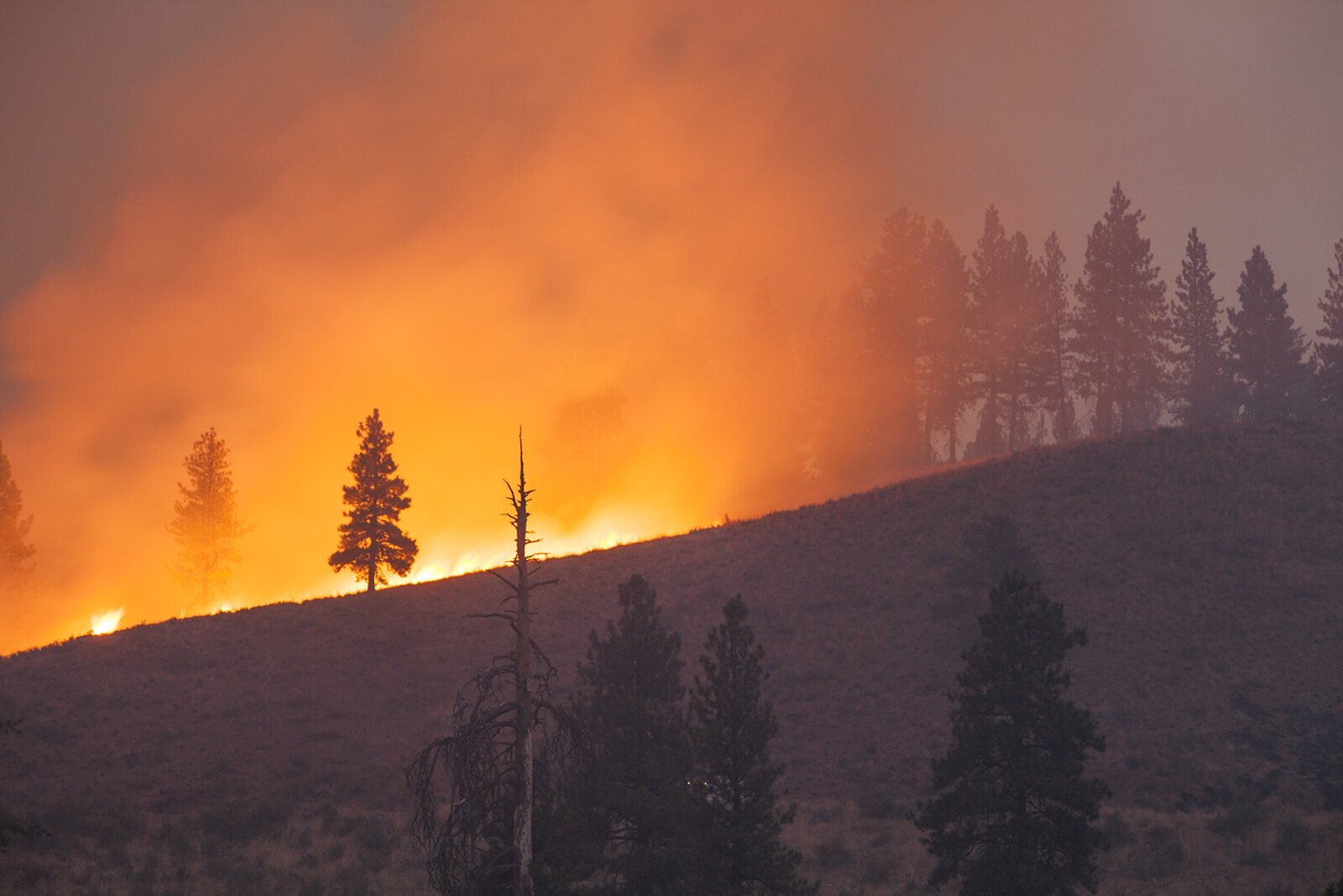Contact your Legislators to Share Your Support for Dedicated Wildfire Funding