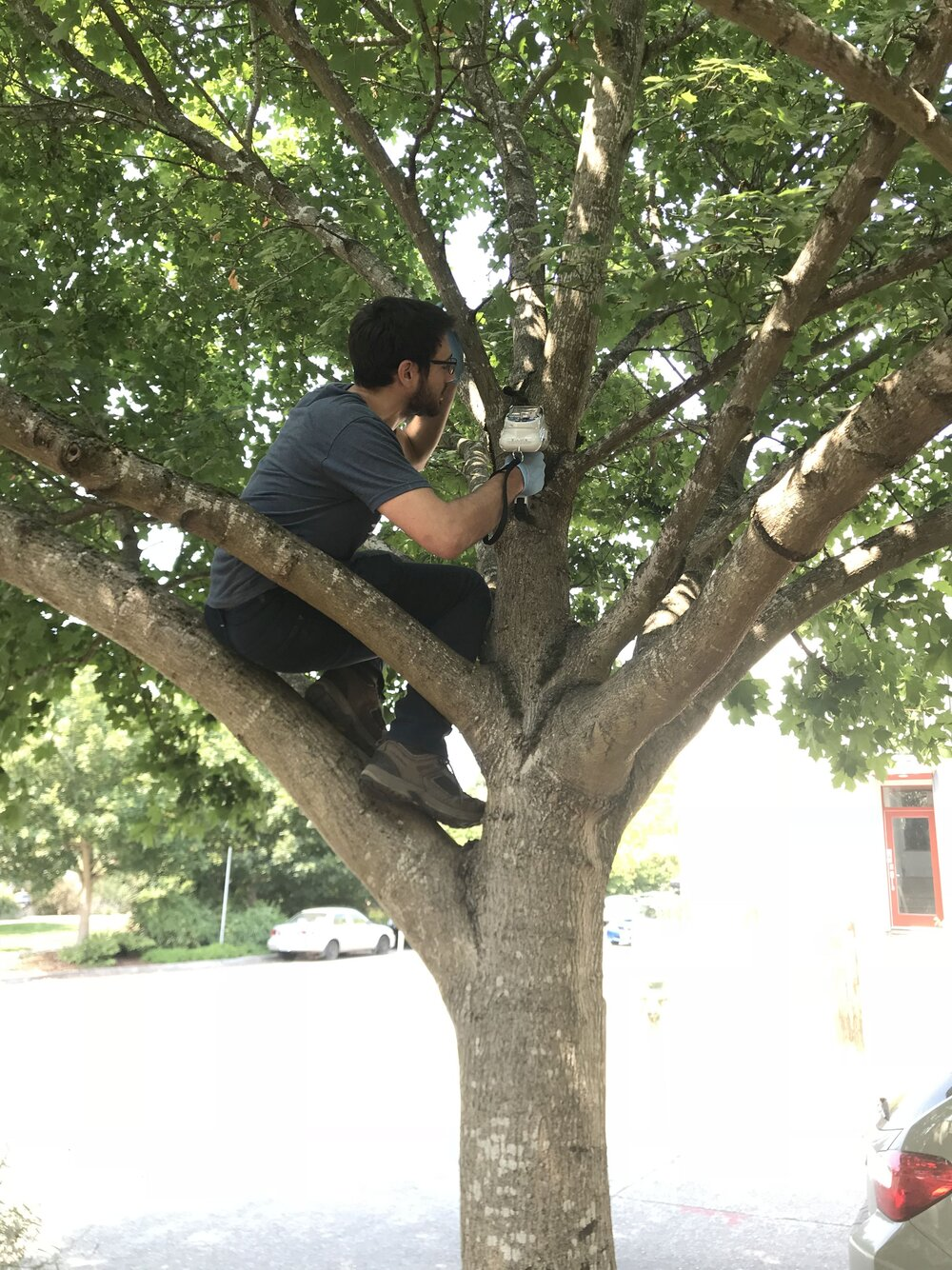 Mathis Messager climbs into a tree to sample moss for metals using a portable x-ray machine. Photo courtesy of Messager.