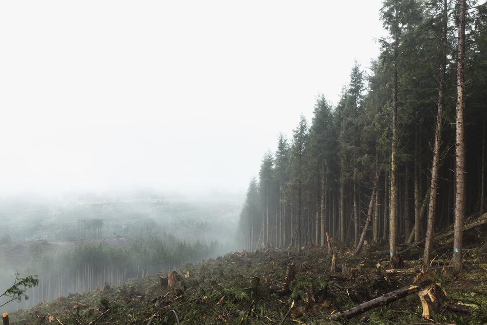 The border between clear cut operations and the Ellsworth Creek Preserve, Washington. Photo: Chris Crisman