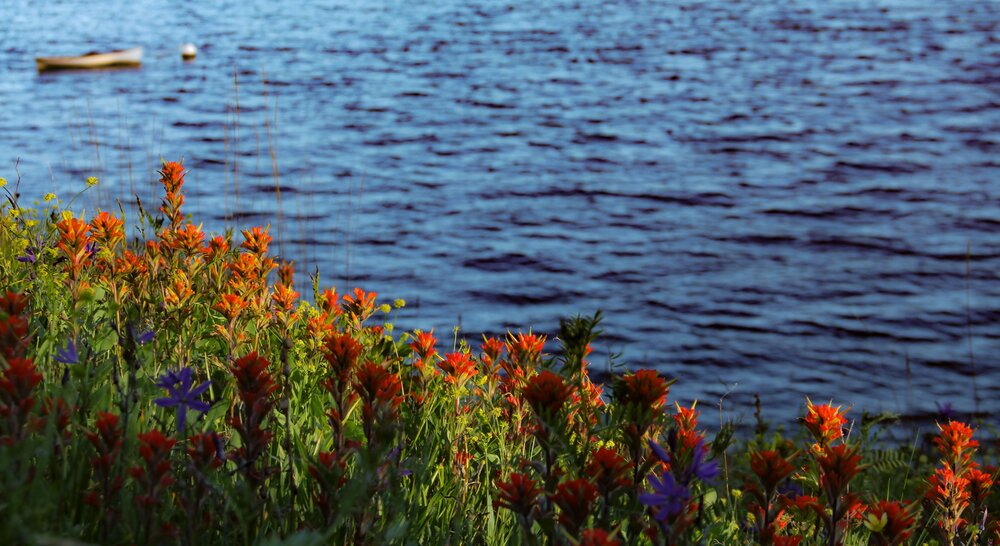 Indian paintbrush in bloom with the Whitehall rowboat floating in the distance.