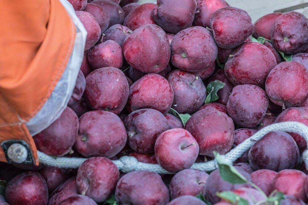 Eastern WA apples by Cameron Karsten.jpg