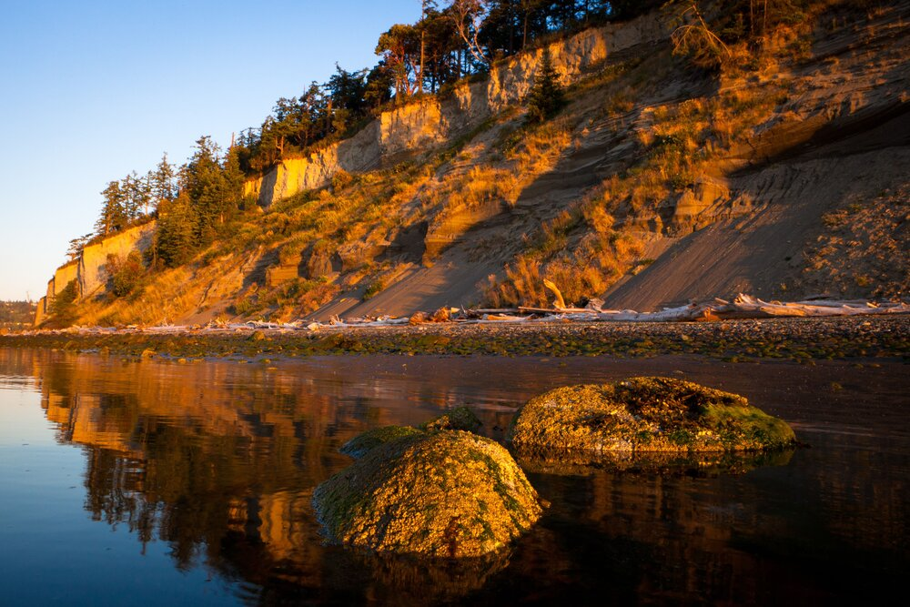 Natural shorelines with bluffs, like this one at Barnum Point on Camano Island, are important for feeding sediment into Puget Sound. Photo by Benj Drummond.