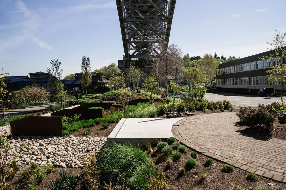 Bioswales, like this one under the Aurora Bridge in Seattle, filter polluted stormwater runoff before in runs into our waterways, making them cleaner and safer for salmon, people and anyone and everything that depends on the water. Photo by Courtney Baxter.