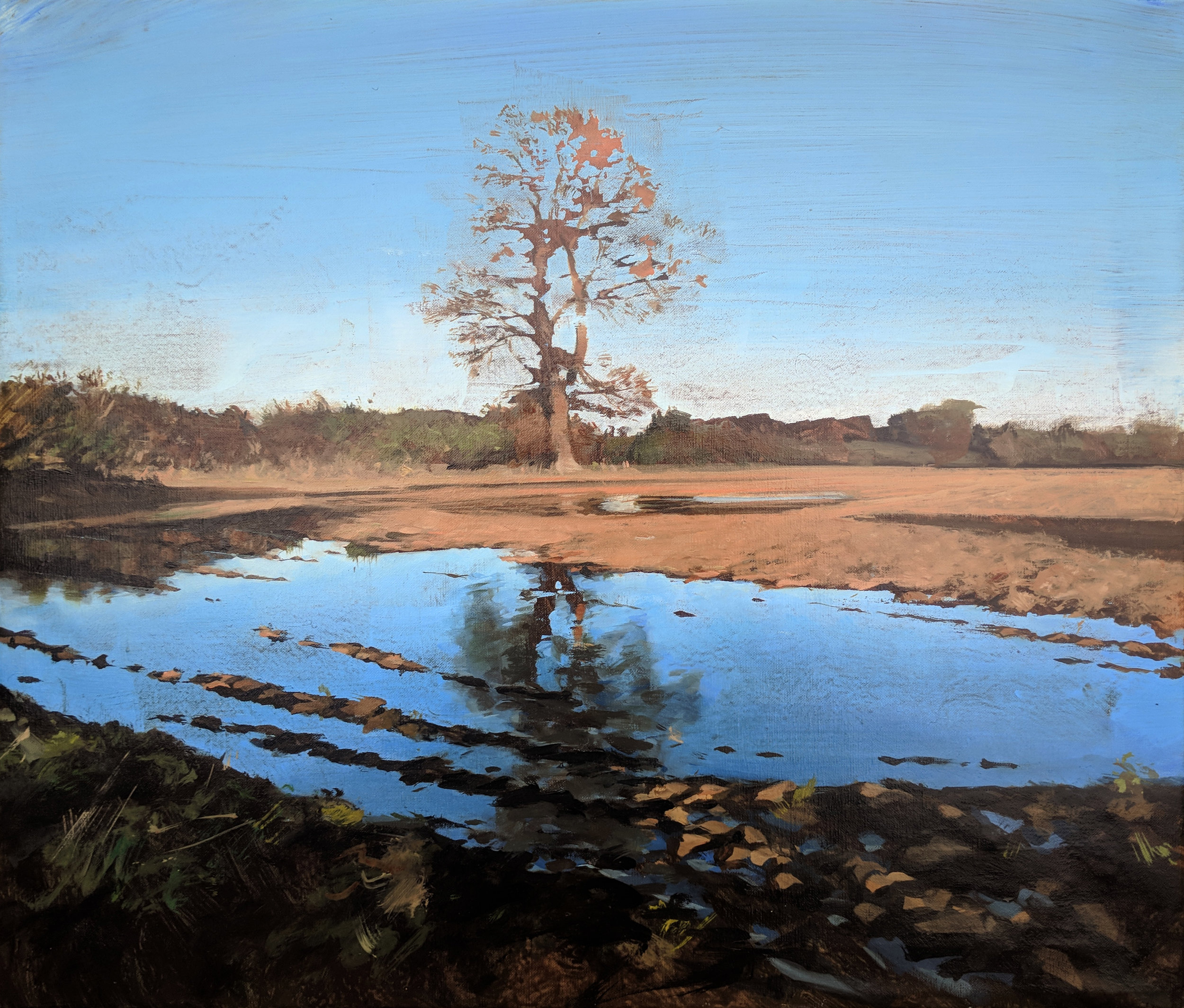 Tree reflected in a flooded field - Ashby.jpg
