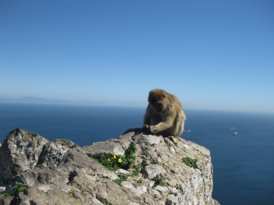 Sureness of place: Africa on the horizon from atop Gibraltar.