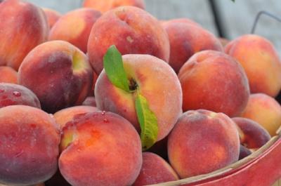 The intermingled colors of peach.