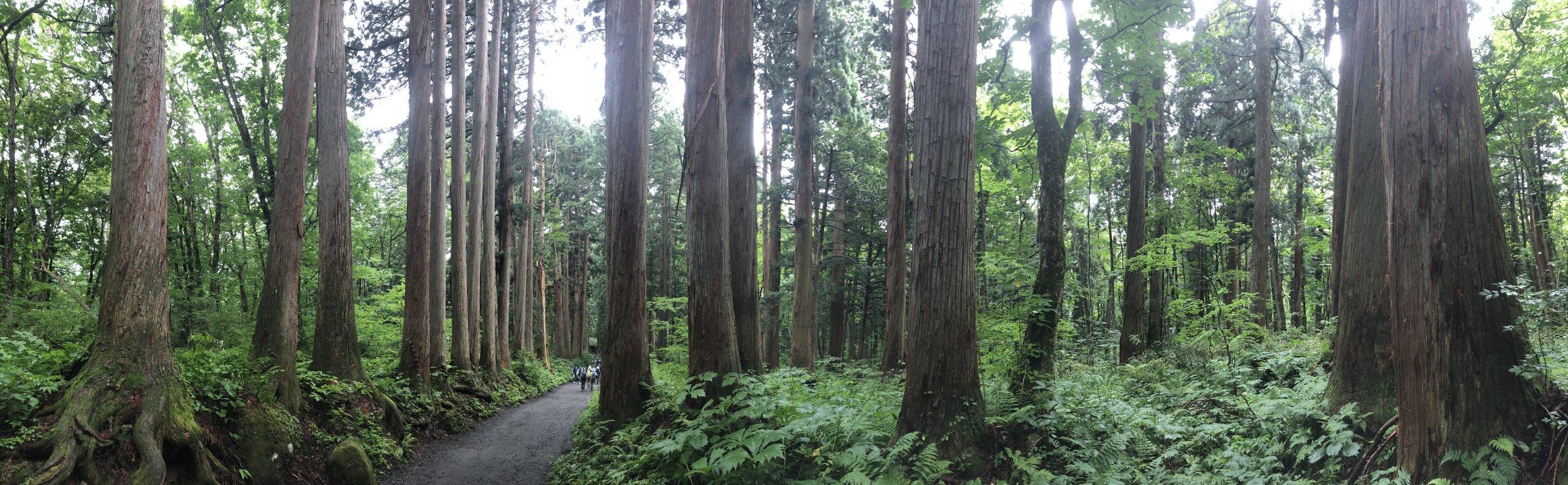Togakushi Forest, Nagano, Japan