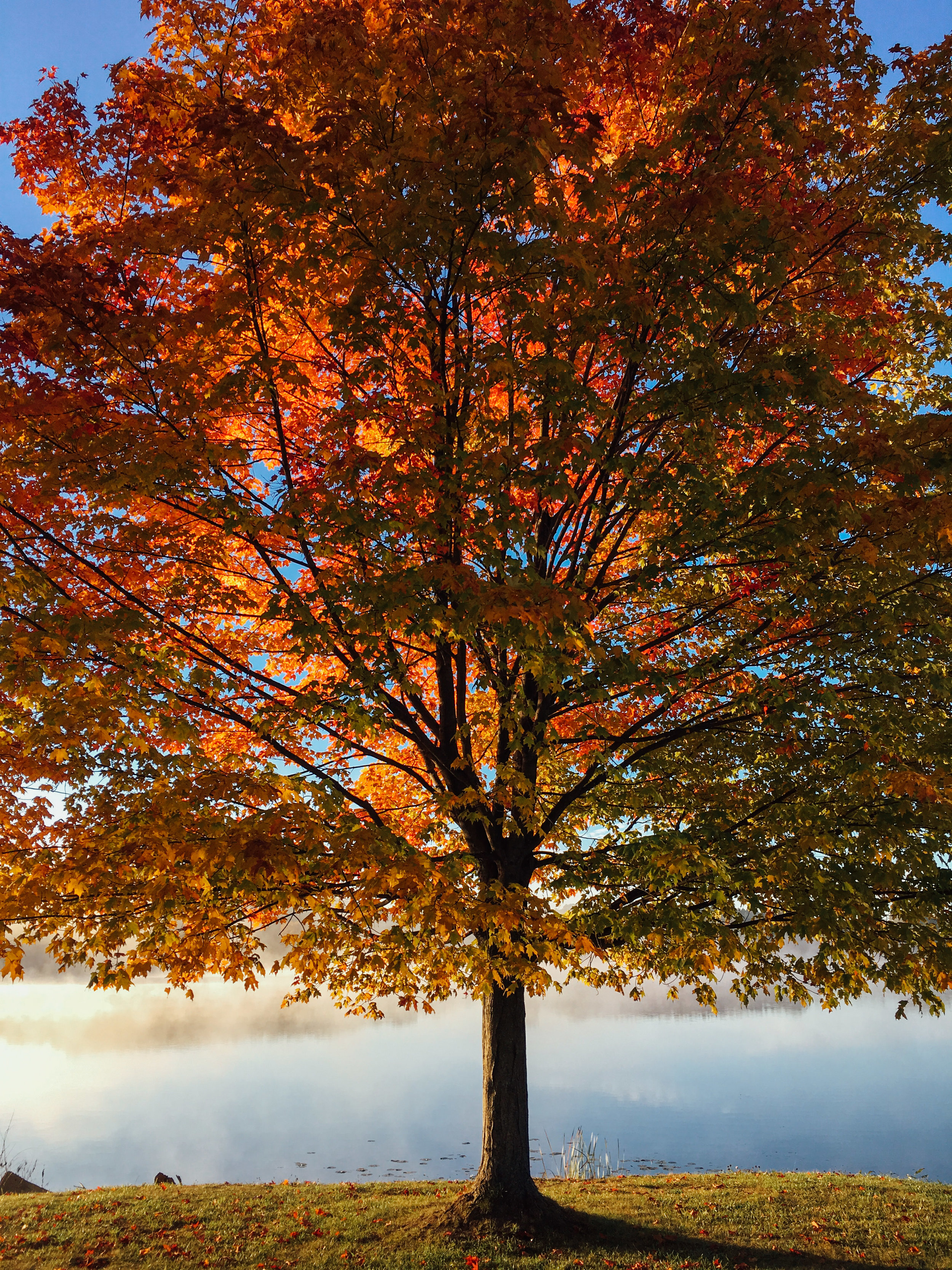 The Giving Forest: Buy a Leaf & Change a Life